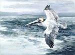 Pelican flight watercolor painting Margy Gates