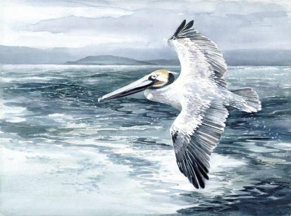 Pelican flight watercolor painting Margy Gates